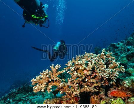Group of scuba divers underwater in depth with detail of coral