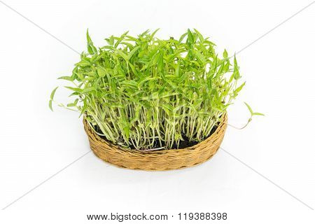 Implant Bean Sprouts In A Rattan Textile Isolated On White Background