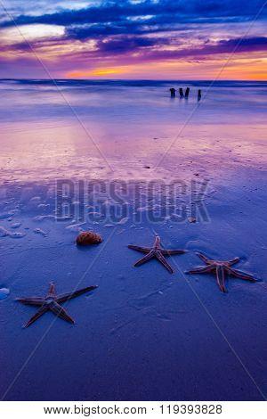 Tropical Beach Landscape Vertical Composition