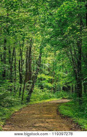 Beautiful Countryside Road Lane Path Way through summer deciduou