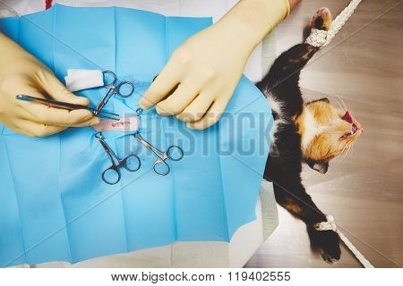 Cat In Veterinary Hospital