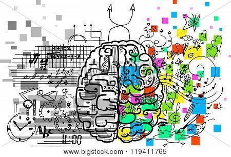 Brain hemispheres