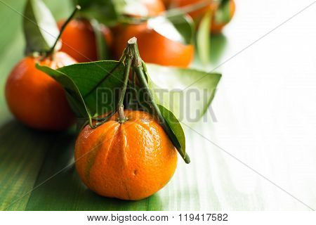 Fresh picked tangerine clementines on wooden green table.