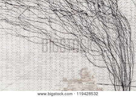 Leafless Plant Growing Over Gray Brick Wall