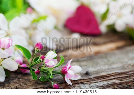 Apple Blossoms On Old Wooden Board