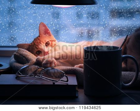 Small ginger kitten lying under the lamp