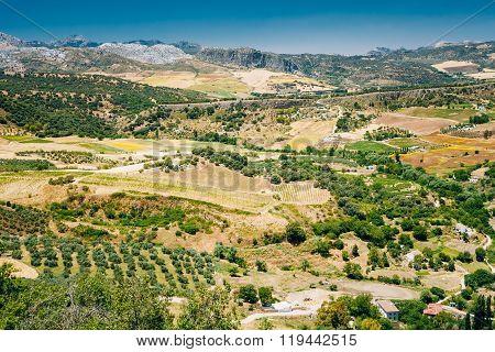 Summer Andalusian Lanscape Near Ronda, Province Of Malaga, Spain