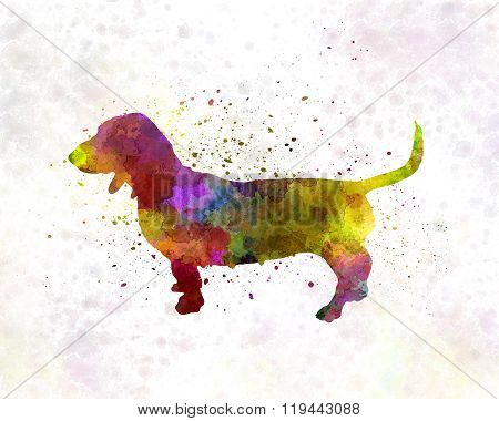 Artesian Norman Basset In Watercolor