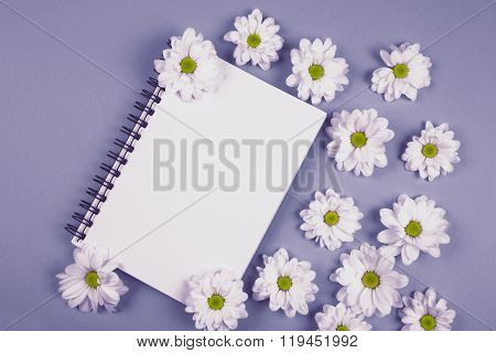 white chrysanthemums flowers on purple background with note book