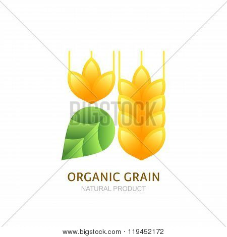 Organic Wheat Grain Logo, Icon, Label Vector Design Elements.