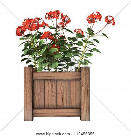 Red Geranium Planter On White