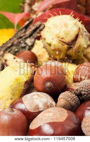 Closeup Of Autumn Acorn And Horse Chestnuts