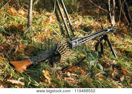 German military ammunition - machine gun of World War II in gras