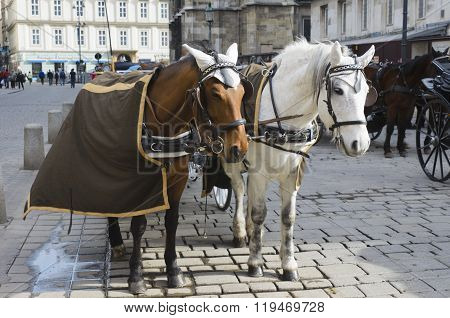 Horses in harness. Blinders saddle bridle and other attributes on horseback. Sport Horse Riding. Karetnaya team.