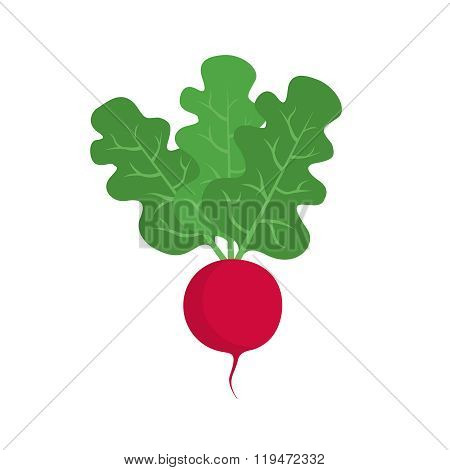 Flat icon radish