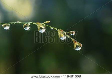 Fresh Grass With Dew Drops And Sun Beams