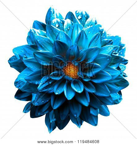 Surreal Wet Dark Chrome Sea Blue Flower Dahlia Macro Isolated On White