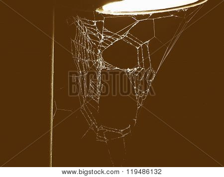 Retro Looking Spider Web