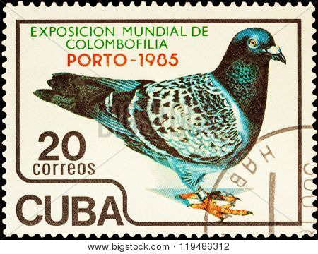 Pigeon On Postage Stamp