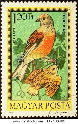 Linnet (carduelis Cannabina) On Postage Stamp