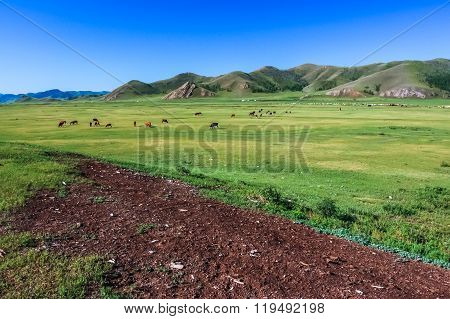 Central Mongolian Steppe