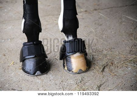 Horse Hooves Of Front Legs Close Up