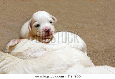 Nice Puppy