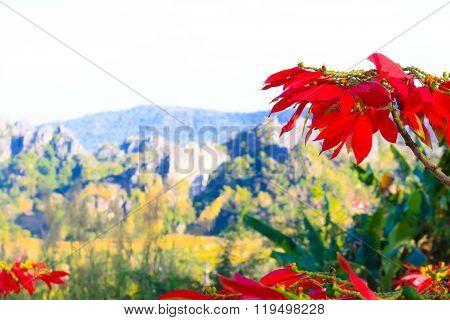Suan Hin Pha Ngam mountain Loei Thailand
