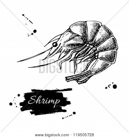 Vector Vintage Shrimp Drawing. Hand Drawn Monochrome Seafood Ill