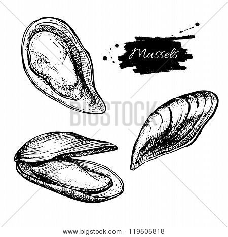 Vector Vintage Mussel Set Drawing. Hand Drawn Monochrome Seafood
