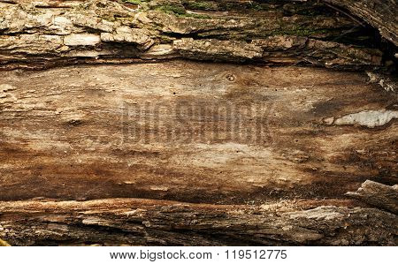 Texture Of Old Wood With Bark