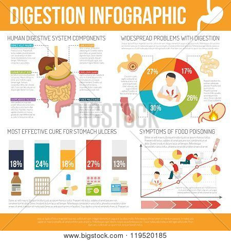 Digestion Infographic Set
