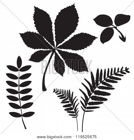 Leaves Of Grass. Colourless Picture. Leaves Falling. Leaves Background. Black Silhouettes. Tree Leaves. Vector Illustration. Autumn Leaves. Fall Leaves. Vintage Picture. Exquisite Dainty Picture.