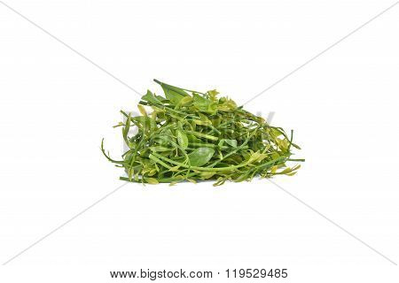 Melientha Suavis Pierre Vegetables For Cooking. (pak-wan-pa)