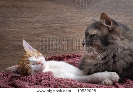 Cat and kitten resting on a knitted rug