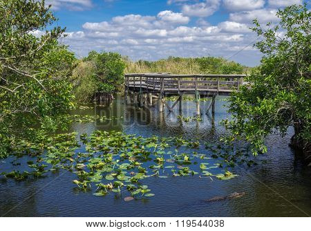 Florida Everglades Boardwalk
