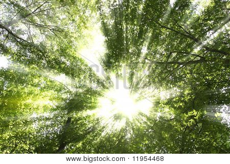 Sunburst through trees