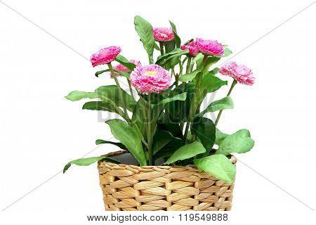 Flowers in a wicker pot closeup.