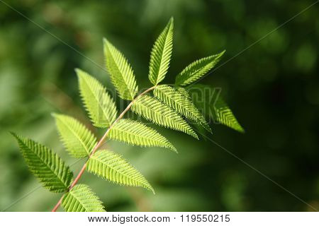 Plant Branch With Green Leaves