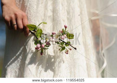 Blooming Sprig Of Apple In Hand