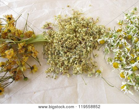 Chamomile flower, elderflower and linden flower drying on white paper