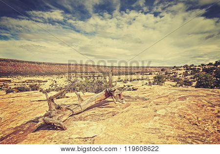 Vintage Toned Picture Of Wild Landscape With A Withered Tree, Shallow Depth Of Field