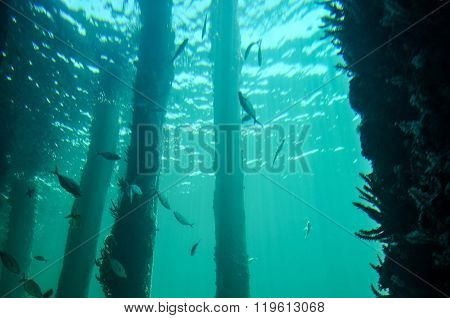 Underwater Reef: View to the Surface