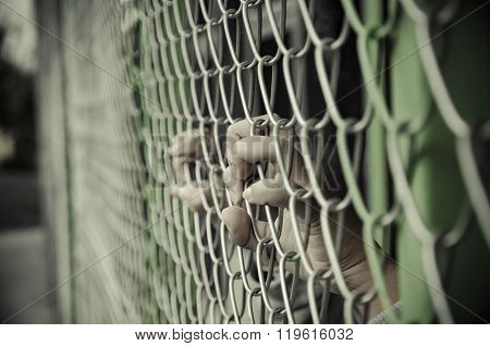 Hands With Steel Mesh Fence