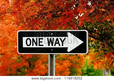 one way sign against autumn trees