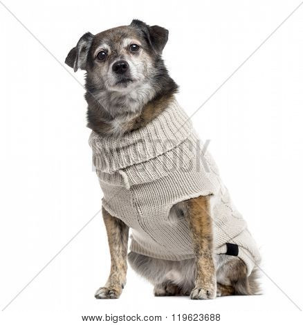 Crossbreed dog dressed and looking at the camera, isolated on white (10 years old)