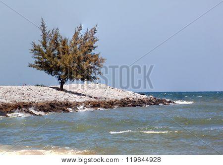 Lone Tree On Waste Rock Dam