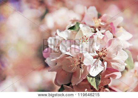 spring blossom flower background