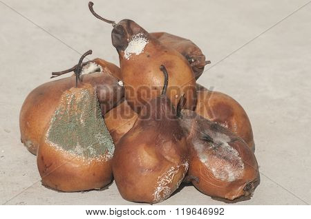 Rotten and moldy pear