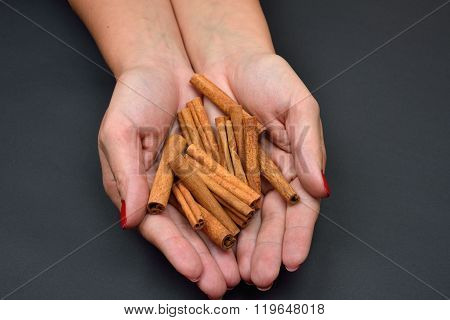Woman's Hands Holding Brown Pods Cinnamon Isolated On Black Background. Spice. Taste. Cooking. Food